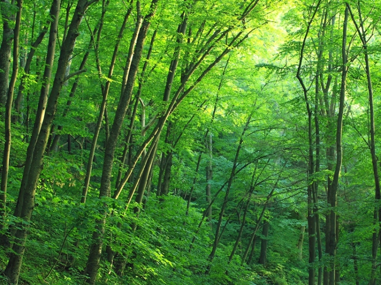 green-trees-on-forest-path