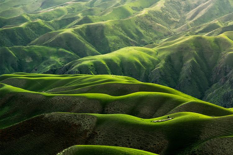 green-mountains-sheep-grazing