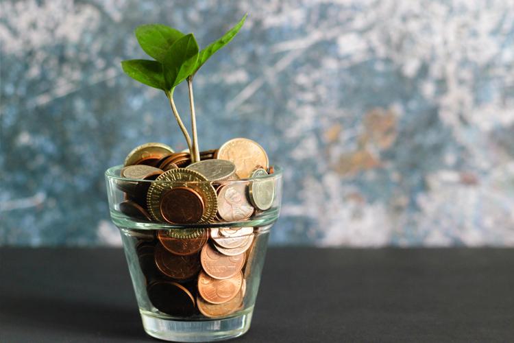 money-plant-growth